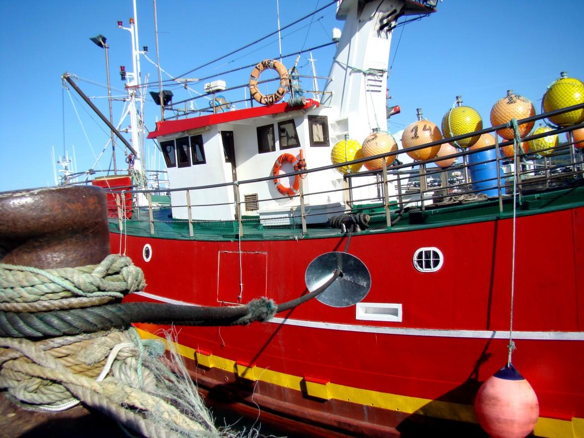 España y Portugal plantean a la Comisión Europea la propuesta de gestión de la pesquería de la sardina atlántica para 2016