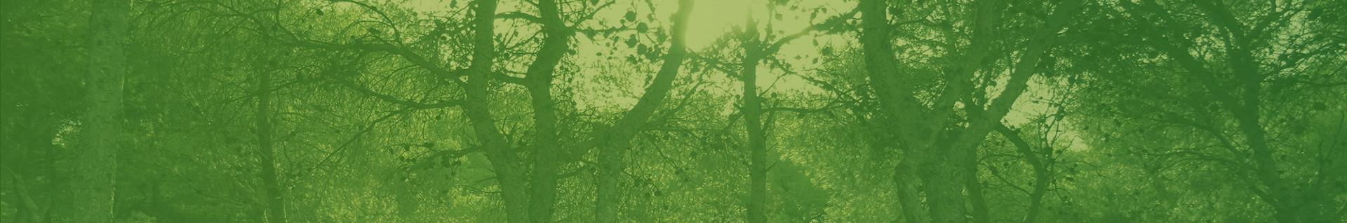 Cabecera bosque