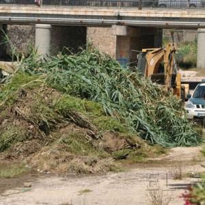 Guelaya tomará acciones legales por atentar contra los nidos de aves protegidas en el río de Oro