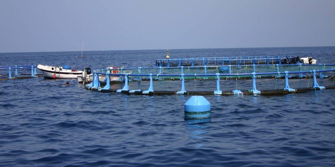El Gobierno actualiza la regulación de las organizaciones profesionales en el sector de la pesca y la acuicultura