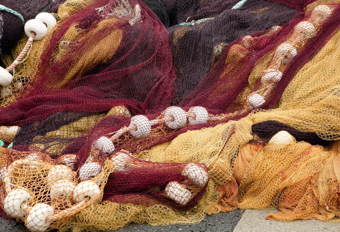 El Ministerio de Agricultura, Alimentación y Medio Ambiente establece el cierre provisional de la pesquería de sardina ibérica y de besugo