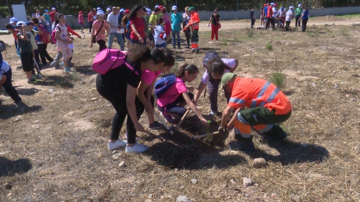 Melilla celebra con árboles el Día Internacional del Medio Ambiente