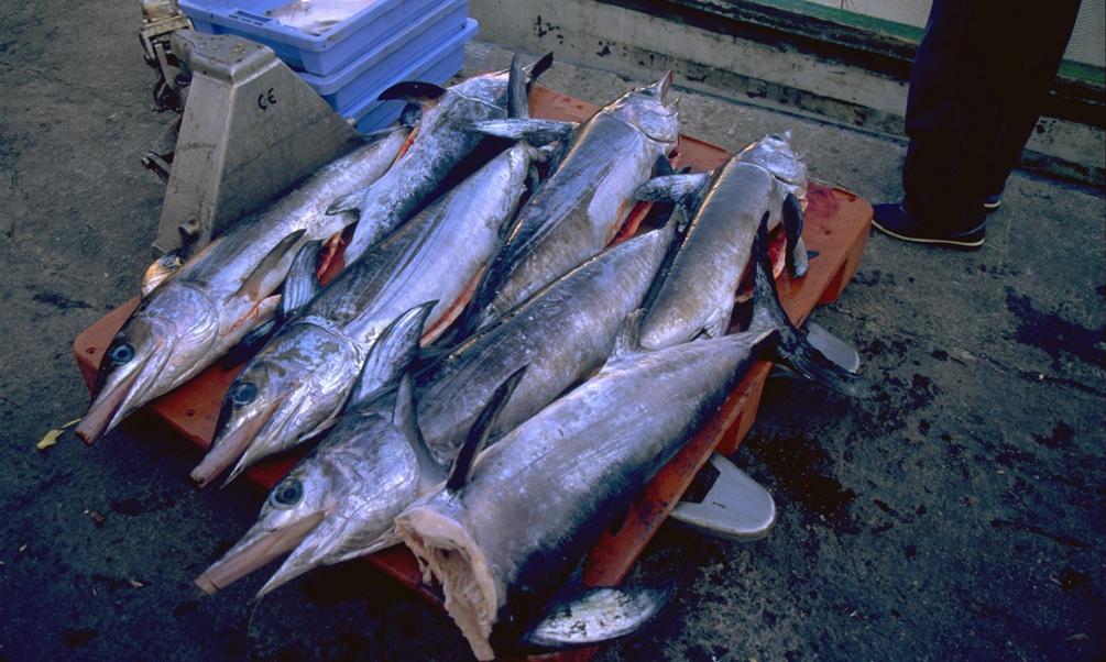 Los pescadores españoles podrán capturar más de 1.800 toneladas de pez espada en el Mediterráneo en la campaña 2017