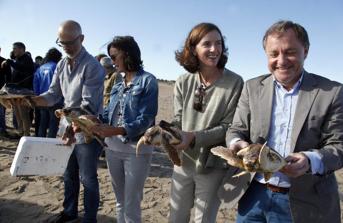 Liberadas 10 tortugas boba marcadas para su seguimiento en el marco del proyecto LIFE IP INTEMARES que coordina el MAPAMA