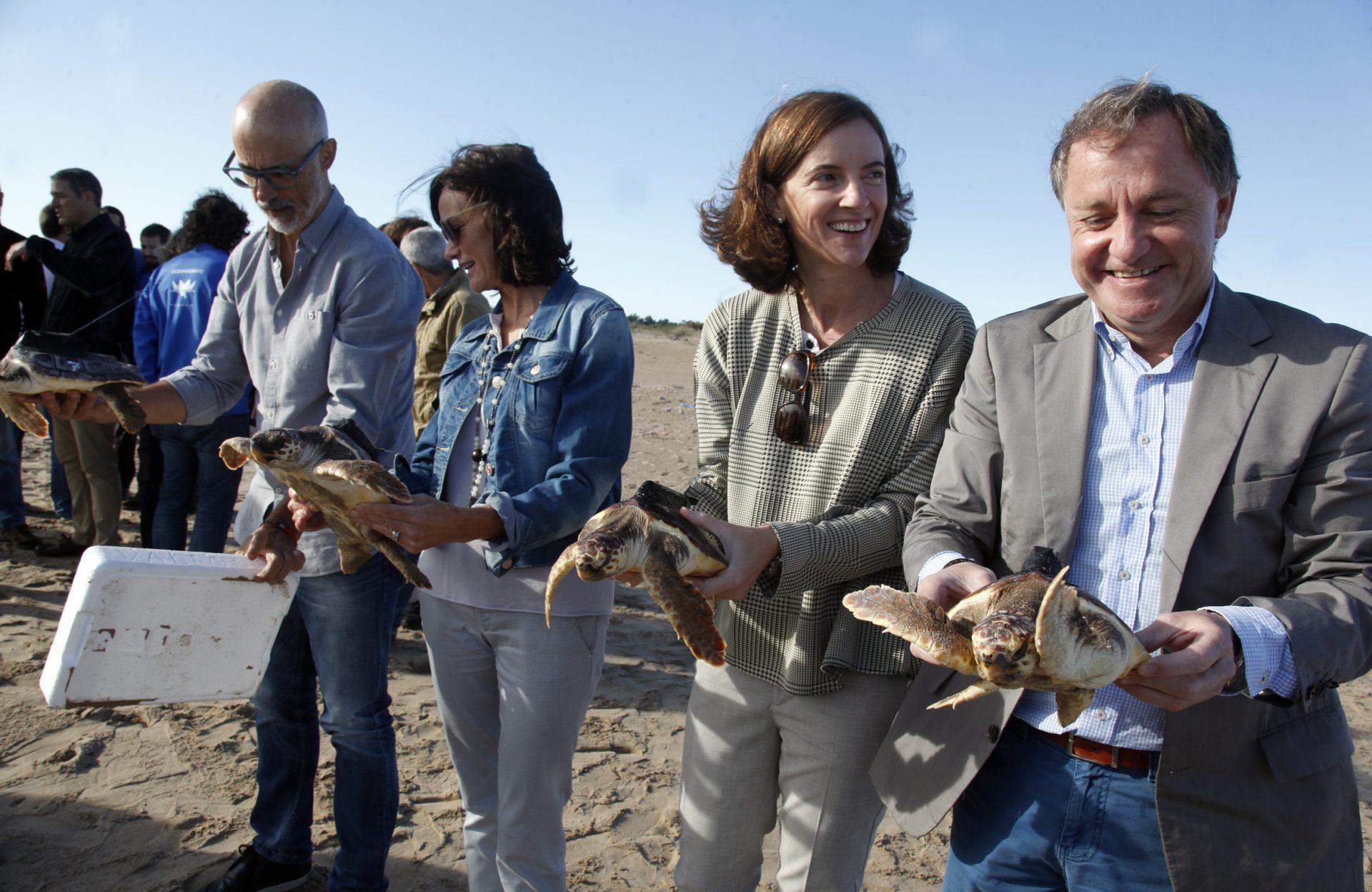 Liberación tortugas bobas